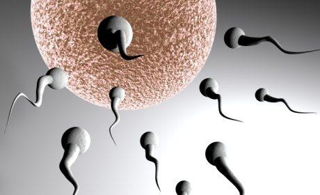 kualitas sperma laki-laki