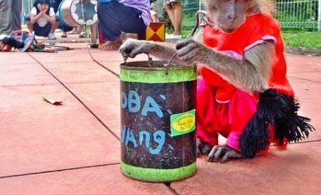 hukum-topeng-monyet
