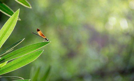 tertelan serangga