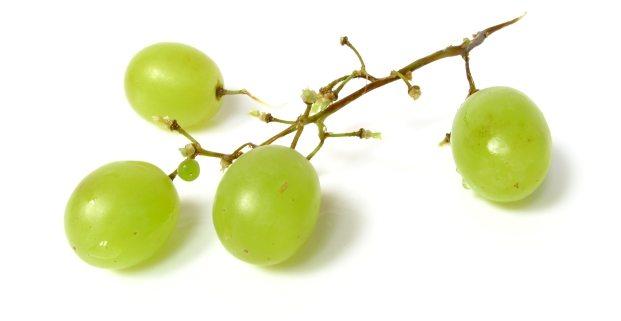 hamil anggur