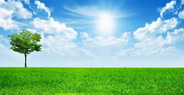 pohon khuldi di surga