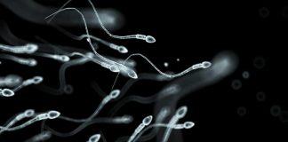 sakit spermatozoa