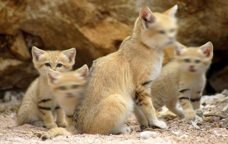 Hukum Membuang Kucing Konsultasi Agama Dan Tanya Jawab Pendidikan Islam