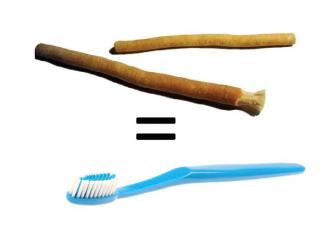 siwak dan sikat gigi
