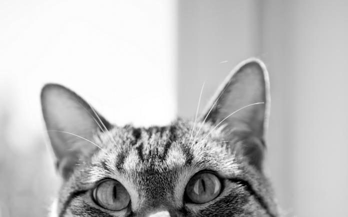 hukum air kencing dan kotoran kucing