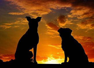 cara mensucikan najis anjing dan hukum memelihara anjing
