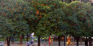 hukum mengambil buah dipinggir jalan