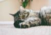 hukum kebiri kucing